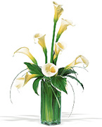 Callas for Anniversary... Very VIP flowers arrangement for your special occassion in USA, flowers, red roses, yellow roses, pink roses, orange roses, white roses, callas, orchids, bouquets, exotics and tropical flowers from Miami Florida to all the United States of America... Caballero flowers, American flowers shop, offers a great and VIP arrangements for DELIVERY to houses, office, funeral, hospital, business, schools in all the USA... Enjoy our online services we will schedule your order and deliver on time...
